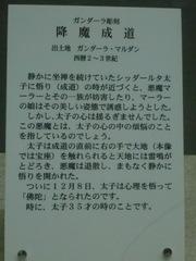 CIMG2915.JPG